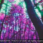 SNAKEPIPEの九州旅行記 2012