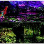 好き好きアーツ!#33 鳥飼否宇 part12   –桃源郷の惨劇&密林–